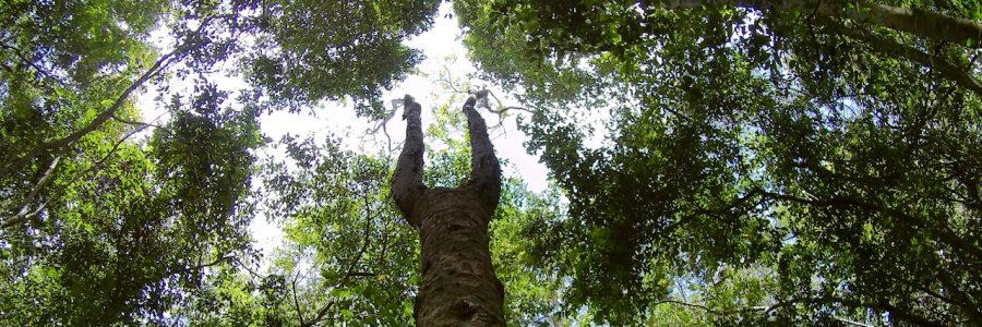 Como llegar a la Reserva de Sian Kaan. Muyil, Sendero Canan Ha y Laguna Chunyaxché